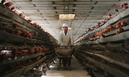 A worker feeds chickens at a poultry farm in Beijing
