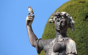 A goldfinch lands on a statue at Powis Castle, Wales.