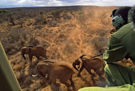 A vet shoots an elephant with a tranquiliser dart outside Amboseli national park in Kenya.