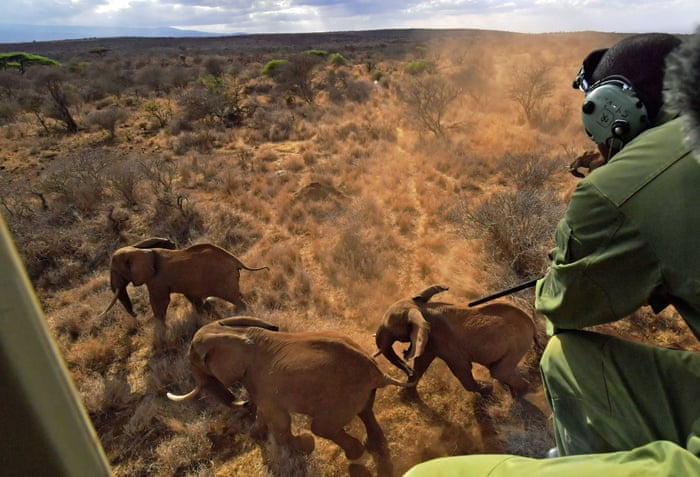 Can elephants and humans live together? | Environment | The