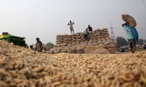 Labourers pile up sacks filled with paddy crop at a wholesale grain market in Chandigarh, India