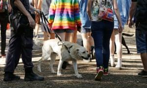 Drug detection dogs at Splendour in the Grass festival, 2016