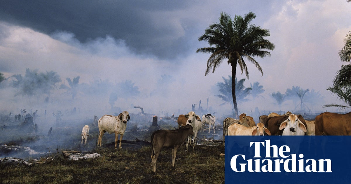 Humanity Has Wiped Out  Of Animal Populations Since  Report  Humanity Has Wiped Out  Of Animal Populations Since  Report Finds   Environment  The Guardian