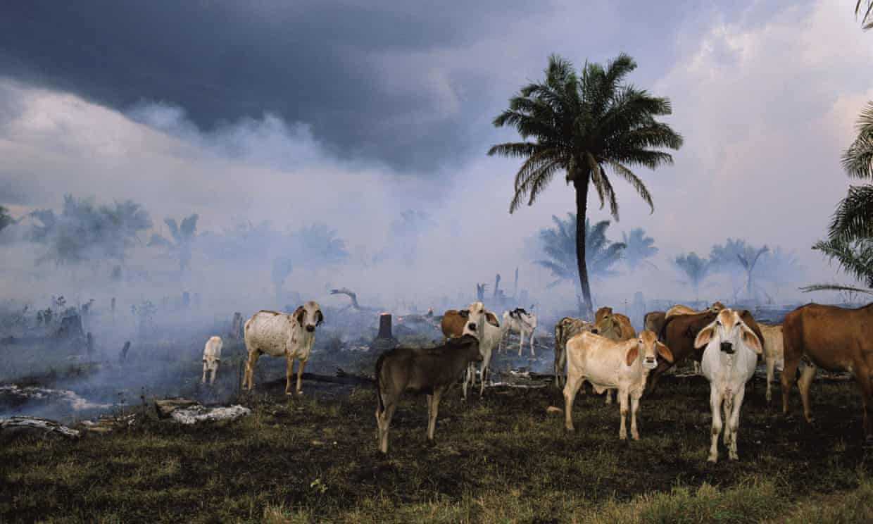 Humanity has wiped out 60% of animal populations since 1970, report finds