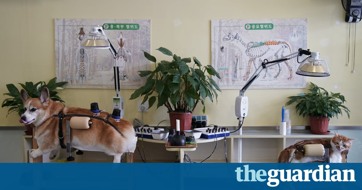 Acupuncture for cats and dogs – in pictures