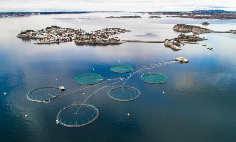 A salmon farm near Bergen, Norway