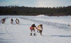 A reindeer and jockey cross the finish point of the 1km race.