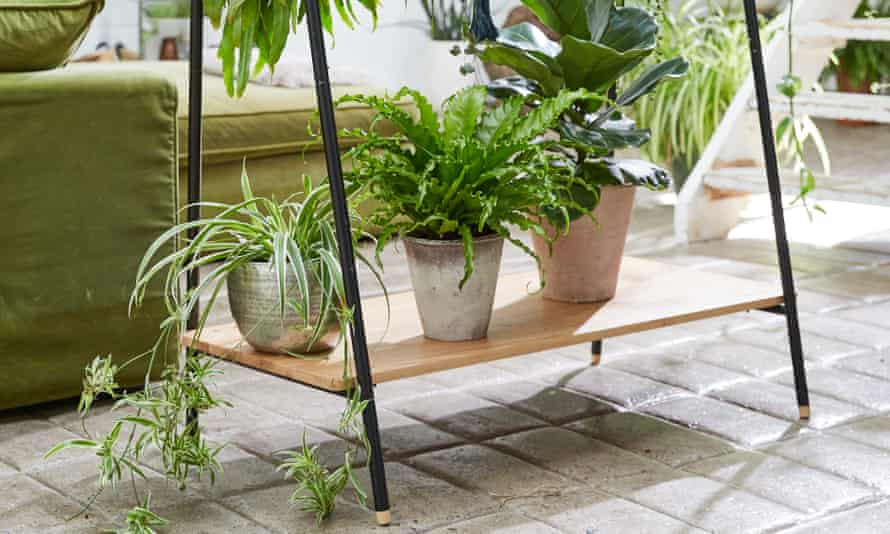 'If you want fresh air, open a window': houseplants have many benefits, but it turns out air filtration isn't one of them.