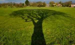 Oak Tree BBC4