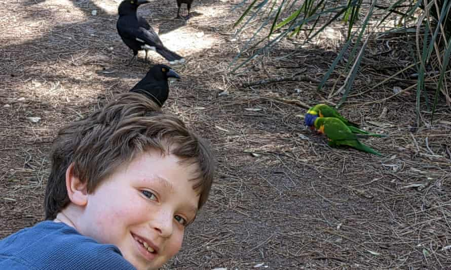 Leon's favourite bird is the rainbow lorikeet, but during lockdown he has been taken by the currawong.