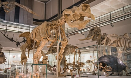A cast of a diprotodon skeleton – the largest marsupial that ever lived – towers over museum visitors