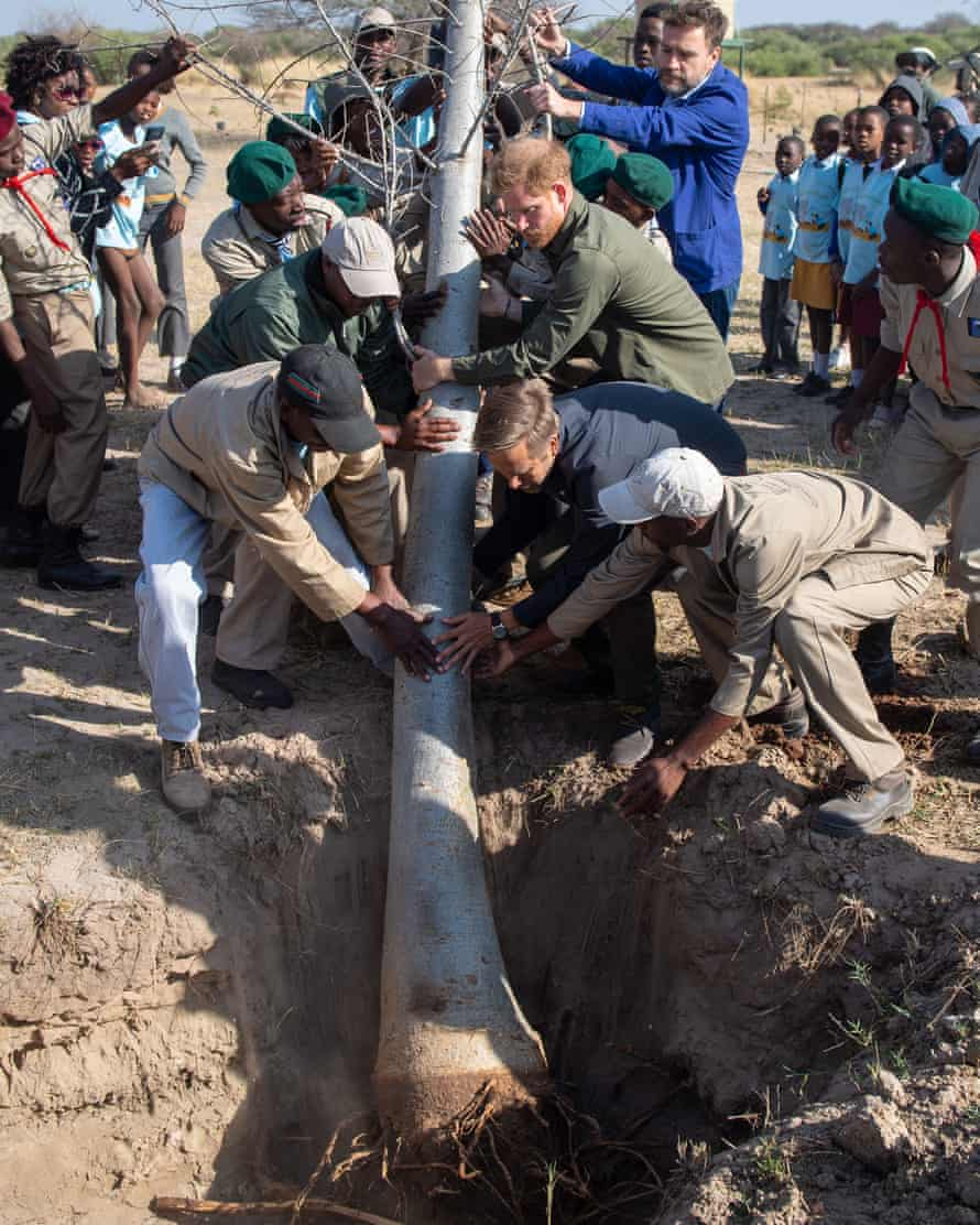 It takes several men, including Harry, to plant a 10-metre baobab tree