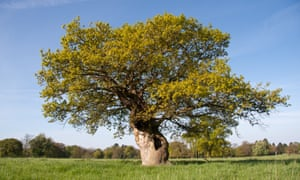 Bronwen Griffiths' tree in Worcestershire.