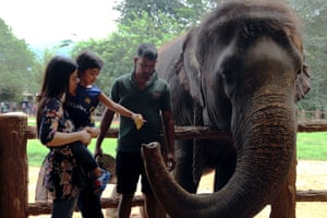 Many tourist attractions are based around the elephants