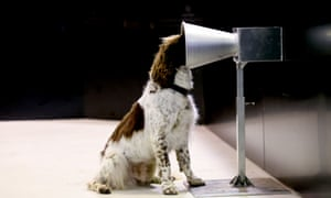 Dog with its head in a funnel