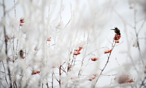 A bird on a rime-covered branch in Harbin, China