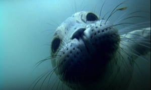 Seal underwater.