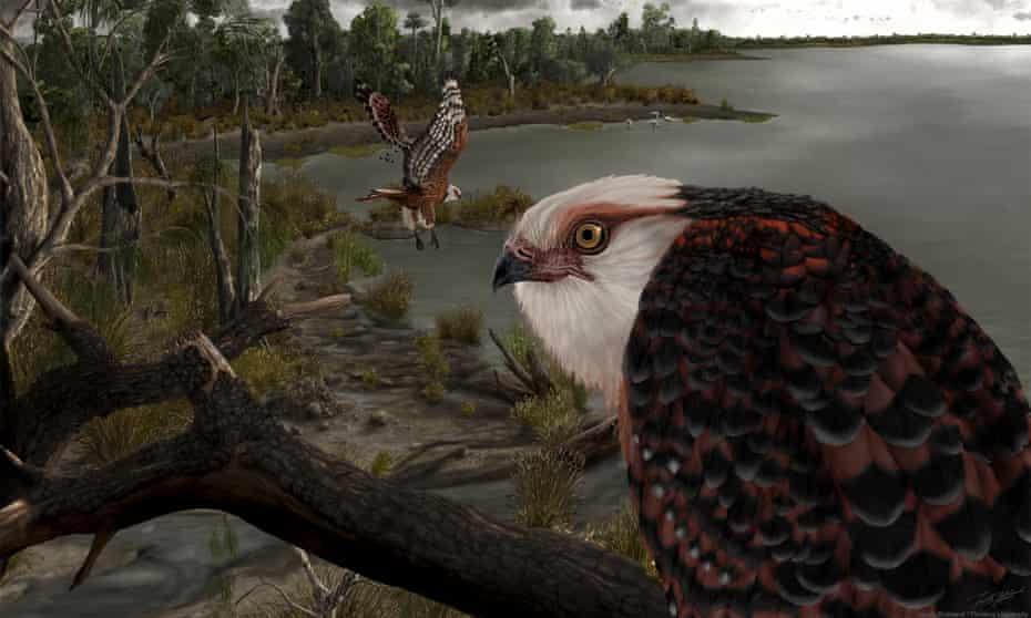 Illustration of eagles