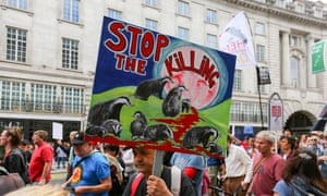 A protest against badger culling and fox hunting in London