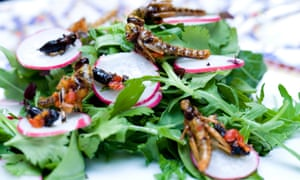 Edible insects on a salad