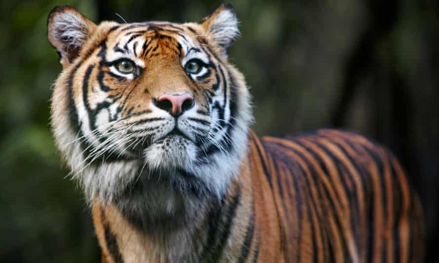 A female zookeeper has died after being attacked by a tiger in Hamilton, New Zealand.