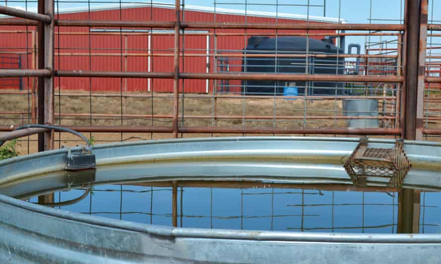 Harvested rainwater from a collection tank trickles into a livestock watering trough on the Bob Durham Ranch.