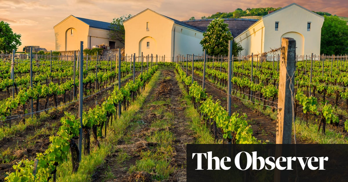A taste for Hungarian wine