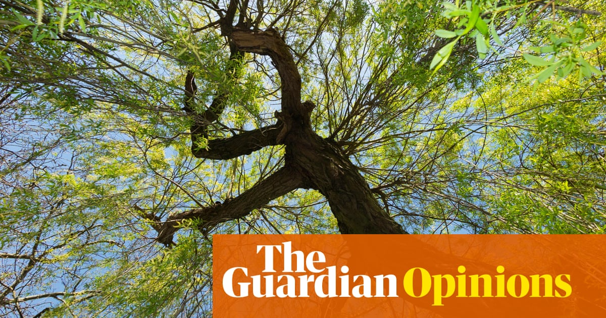 'Can I sunbathe in the park?' is now a deep moral question | Alison Hills