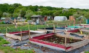 People have been busy, perhaps more than ever before, growing vegetables on their allotments during the lockdown
