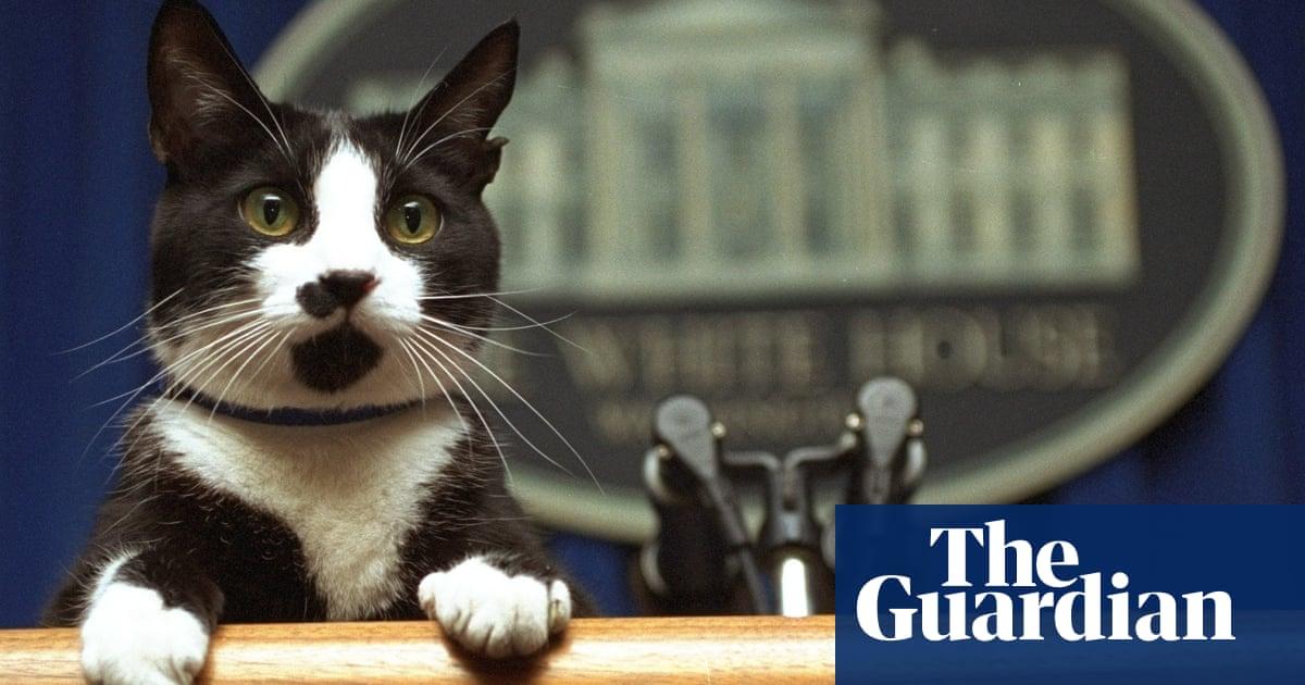 Jill Biden deja que el gato salga de la bolsa: Los perros de la Casa Blanca tendrán un nuevo amigo felino