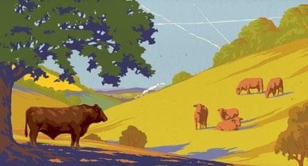 Peak beef illustration