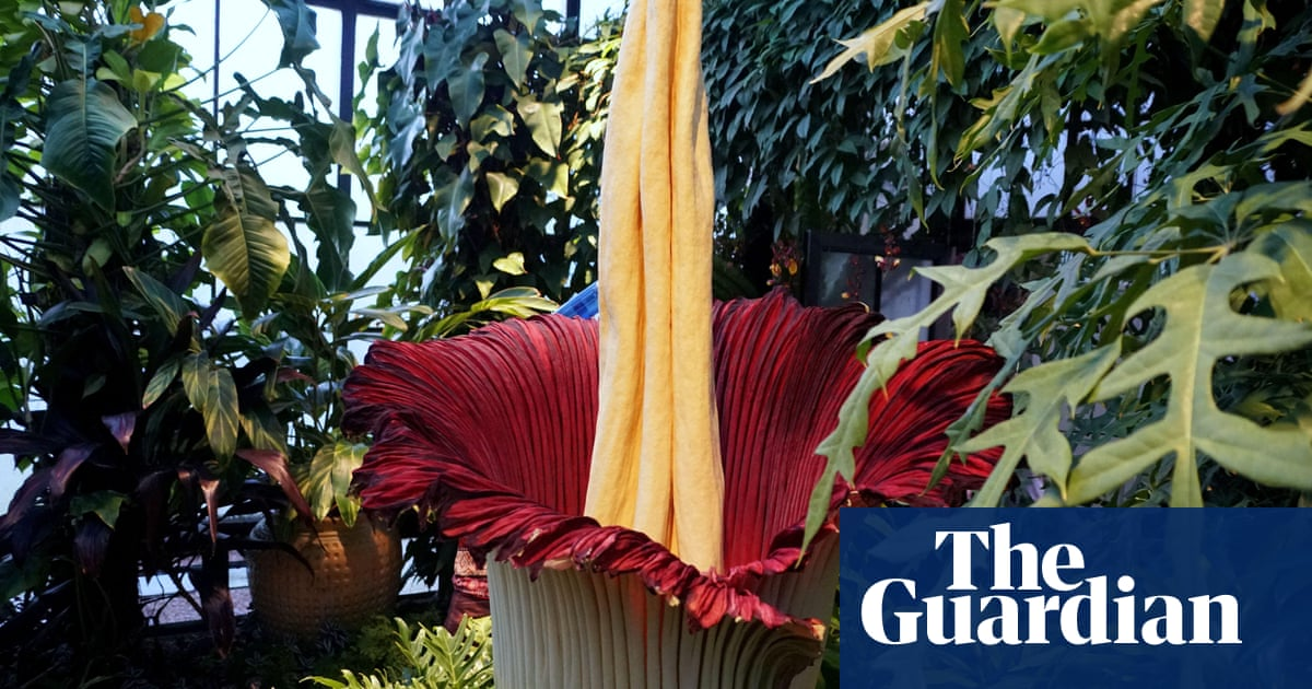 The Titan arum flower has what gruesome nickname? The Saturday quiz