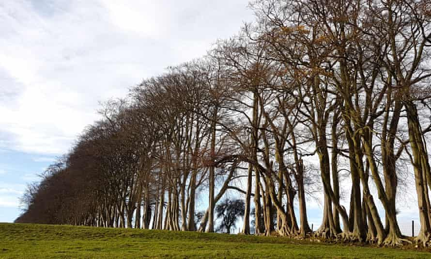 Beech trees on Tuthill