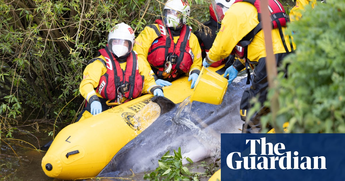 Stranded whale in Thames to be put down after suffering injuries