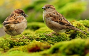 Farmland bird populations have declined by 56% since 1970.