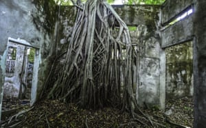 A tree that grows inside a ruined house in Armero, Colombia