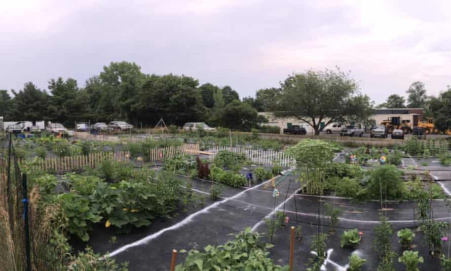 A panoramic view of one of Watson's fellowship garden plots in Orange, Connecticut