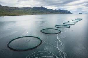 The fish farm of Ice Fish Farm in Faskrudsfjordur.