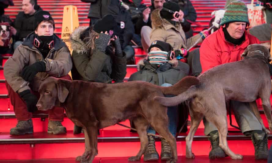 The dogs largely appeared happy to attend the event.