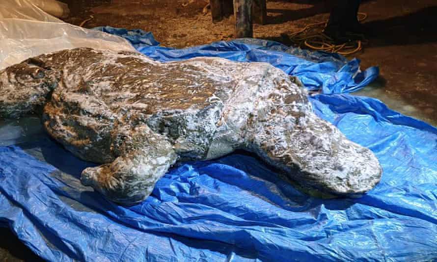 The woolly rhino, from Siberia's Yakutia region