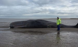 Whale on Norfolk beach