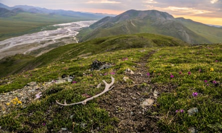 If transferred to the state, Alaska's Arctic National Wildlife Refuge could be opened up to drilling.