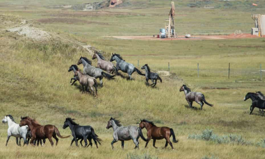 Wild horses roam past an oil well at Theodore Roosevelt national park in North Dakota.