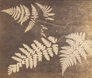 Fern Leaves, c 1850. Unknown British photographer, photogenic drawing