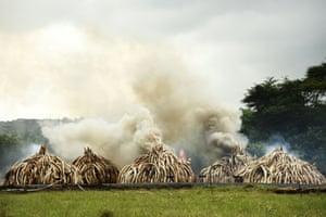 Stacks of Ivory burning at the Nairobi National Park