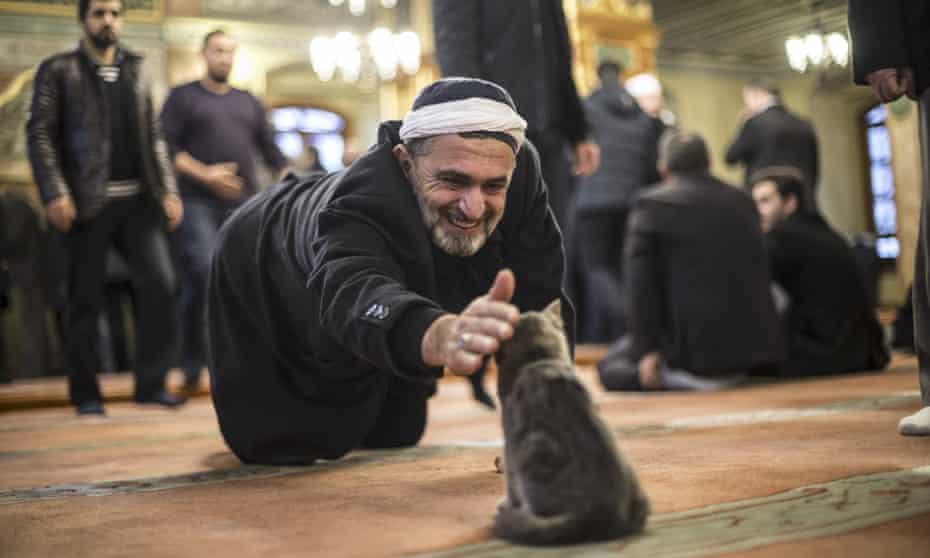 A man strokes a cat at Imam Aziz Mahmud Hudayi mosque in Istanbul.