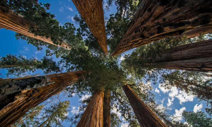 A conservation group has struck an unusual deal to acquire the last, largest privately owned sequoia grove.