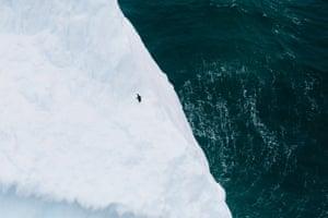 A lone Adelie penguin wanders along an iceberg