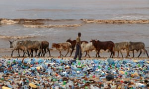 A cattle herder on a beach in Ghana covered with plastic bottles