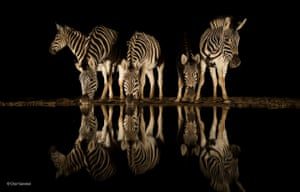 The nightcap by Charl Senekal, South Africa 'For Charl, nothing beats the excitement and anticipation of sitting in wait at a waterhole during the dry season, knowing that anything can appear out of the darkness. The herd of zebra in South Africa's Zimanga game reserve surpassed his wildest wishes, and the still conditions resulted in a near-perfect reflection.'